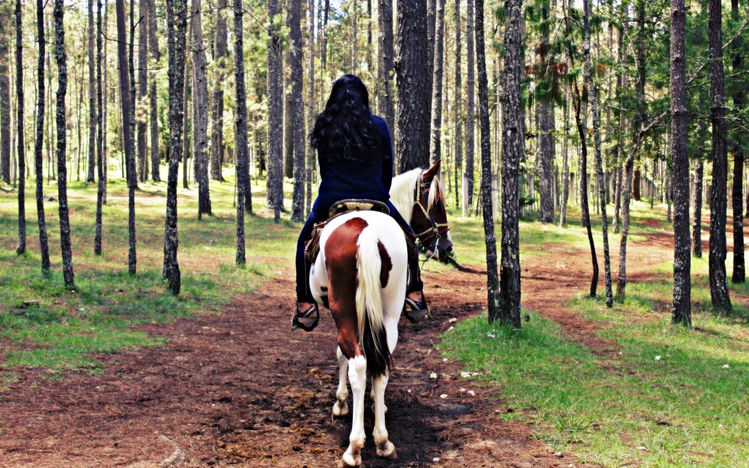 3 Reasons to Stop Chasing Perfect with Your Horse