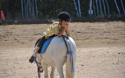 5 Steps to Better Understanding Your Horse – Part 3
