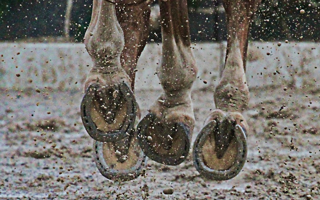 Horse Cantering in Mud