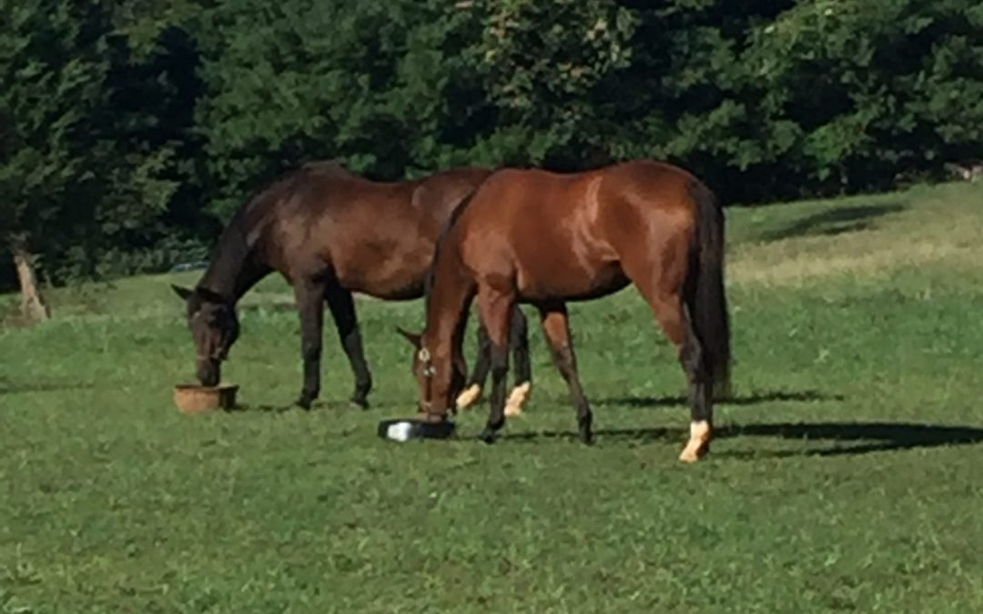 The Horsey Life - Laddie and Bella grazing