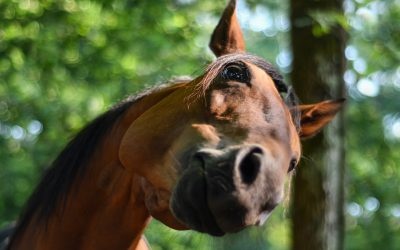 5 Steps to Better Understanding Your Horse –  Part 2