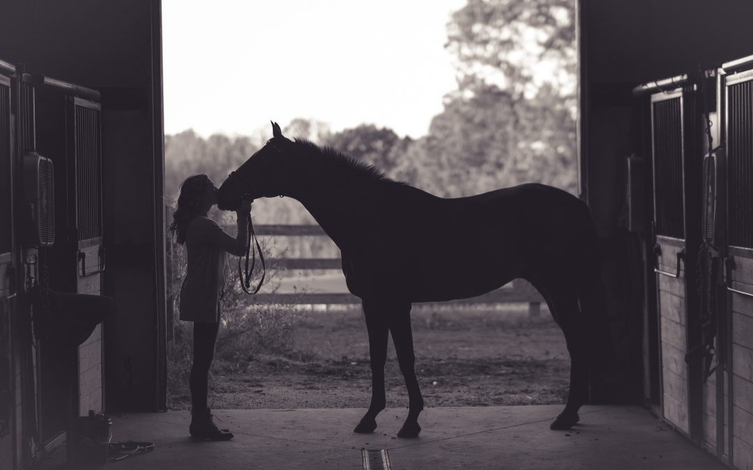 5 Steps to Better Understanding Your Horse –  Part 1